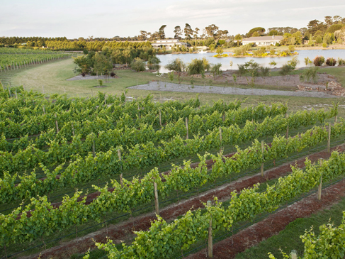 Capella Vineyard, Mornington Peninsula, Victoria, Australia